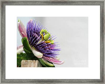 Spikey Passion Flower Framed Print by Sabrina L Ryan