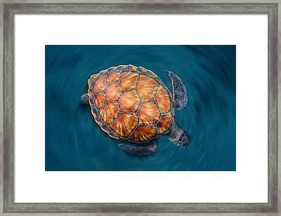 Spin Turtle Framed Print by Sergi Garcia
