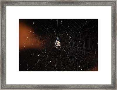 Spinning The Web Framed Print by Peter  McIntosh