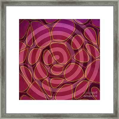Spiral 2 - Abstract Painting Framed Print by Edward Fielding
