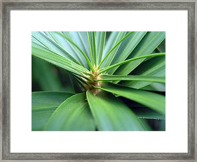 Spiral Leaves Framed Print by Dustin K Ryan