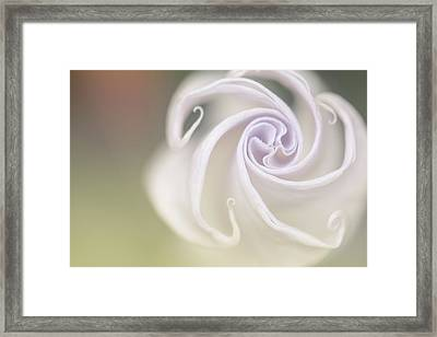 Spiral Framed Print by Nailia Schwarz