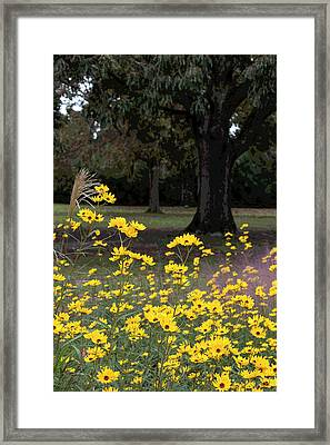 Splashes Of Yellow Framed Print by Suzanne Gaff