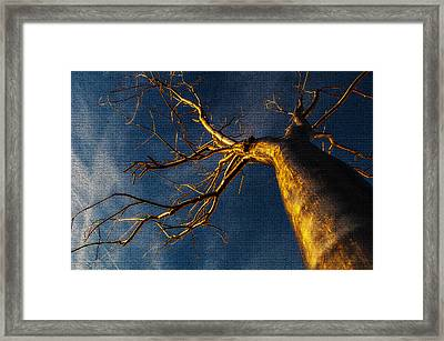 Split - Mosaic Tiles Framed Print by Pelo Blanco Photo