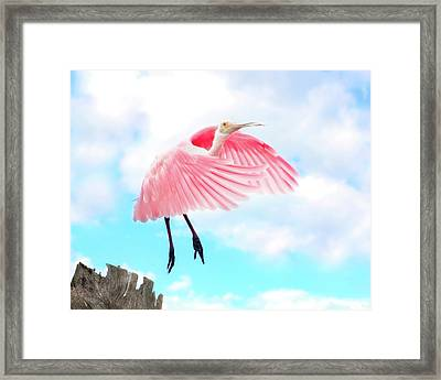 Spoonbill Launch Framed Print by Mark Andrew Thomas
