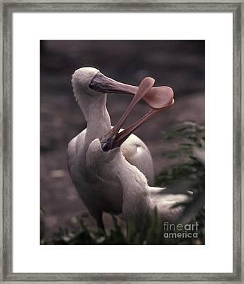 Spooning Framed Print by Warren Sarle