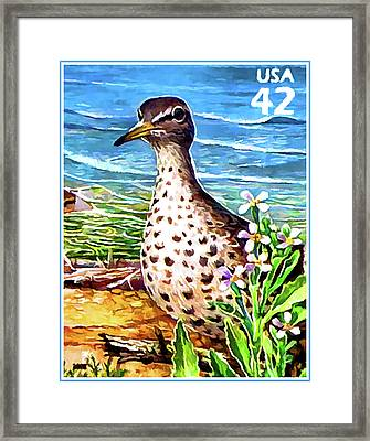 Spotted Sandpiper Framed Print by Lanjee Chee