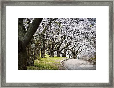 Spring Apple Orchard Framed Print by Elena Elisseeva