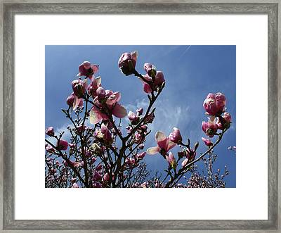 Spring Blooms 2010 Framed Print by Anna Villarreal Garbis