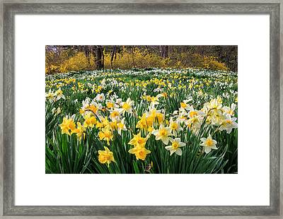 Spring Blooms Framed Print by Bill Wakeley