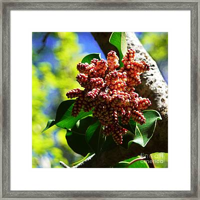 Spring Blossom 1 Framed Print by Xueling Zou