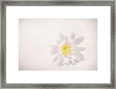 Spring Blossom Framed Print by Scott Norris