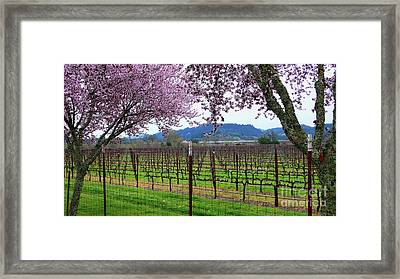 Spring Blossoms Near Calistoga Framed Print by Charlene Mitchell