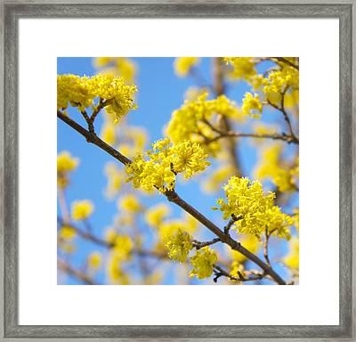 Spring Blossoms Framed Print by Art Spectrum