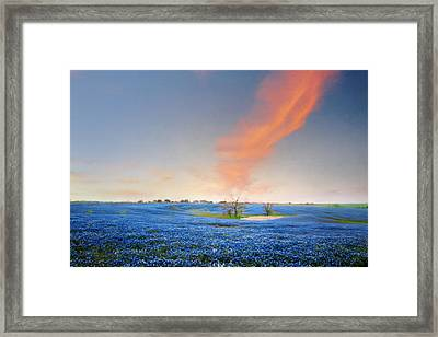 Spring Bluebonnets In Texas Framed Print by David and Carol Kelly