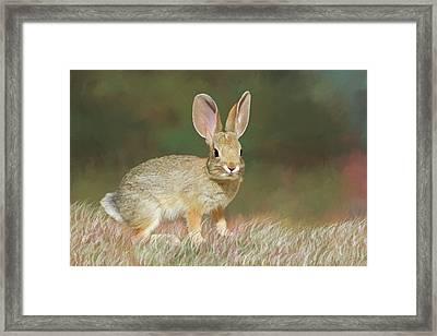Spring Bunny Framed Print by Donna Kennedy