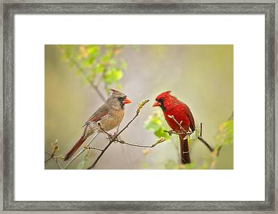 Spring Cardinals Framed Print by Bonnie Barry