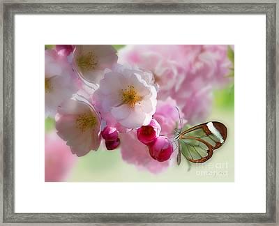 Spring Cherry Blossom Framed Print by Morag Bates