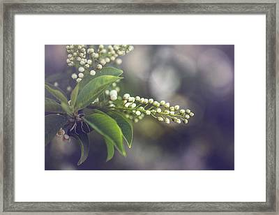 Spring Framed Print by Cindy Grundsten