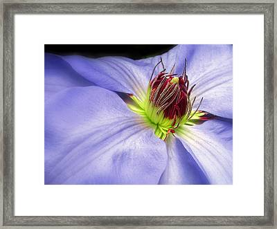 Spring Clematis Framed Print by Jessica Jenney