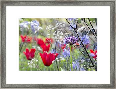 Spring Colour Framed Print by Tim Gainey