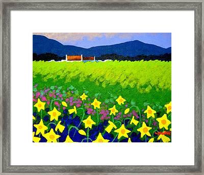Spring Daffs Ireland Framed Print by John  Nolan