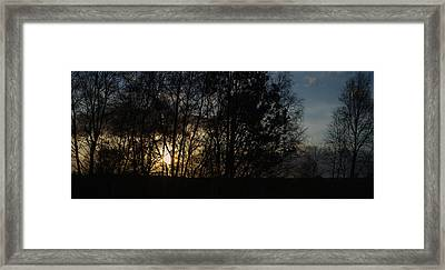 Spring Evening Sunset Through Trees Framed Print by Adrian Wale