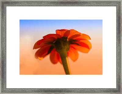 Spring Flower Framed Print by Art Spectrum