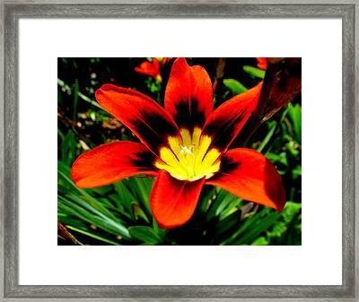 Spring Flower Framed Print by Joyce Woodhouse