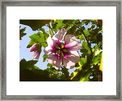 Spring Flower Peeking Out Framed Print by Amy Vangsgard
