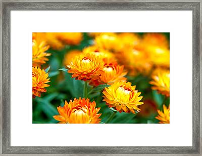 Spring Flowers In The Afternoon Framed Print by Az Jackson