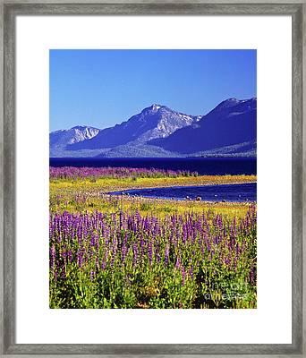 Spring Flowers Lake Tahoe Framed Print by Vance Fox