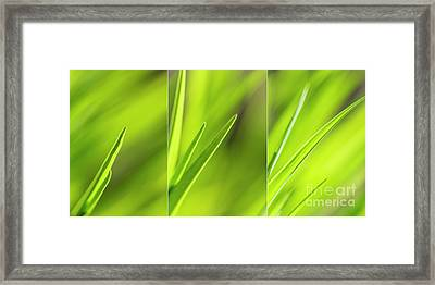 Spring Green Framed Print by Veikko Suikkanen