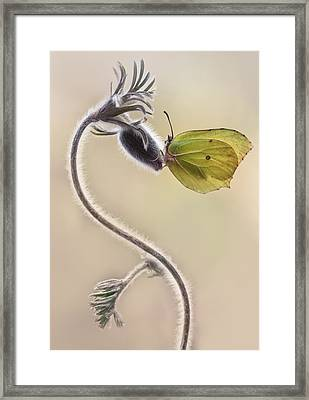 Spring Impression With Yellow Butterfly Framed Print by Jaroslaw Blaminsky