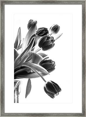 Spring In Black And White Framed Print by Maggie Terlecki