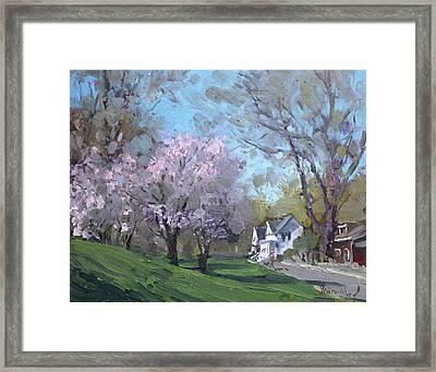 Spring In J C Saddington Park Framed Print by Ylli Haruni