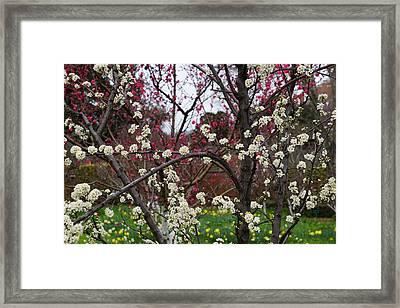 Spring In The Garden Framed Print by YT Photo