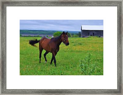 Spring In The Pasture Framed Print by Bill Willemsen