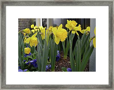 Spring In Yellow Framed Print by Larry Bishop