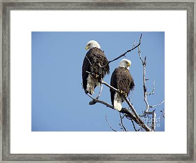 Spring Is In The Air 2 Framed Print by Dora Miller