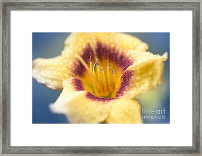 Spring Lily Framed Print by Sharon Mau