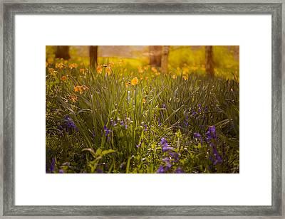 Spring Meadow Framed Print by Chris Fletcher