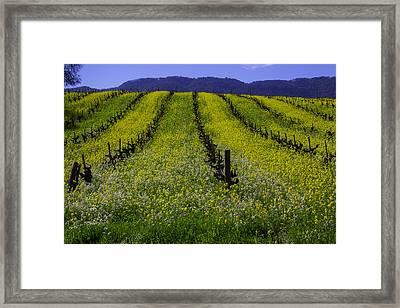Spring Mustard Field Framed Print by Garry Gay