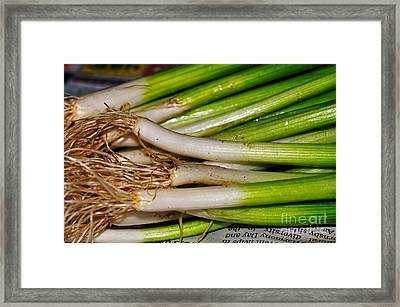 Spring Onions Framed Print by Kaye Menner