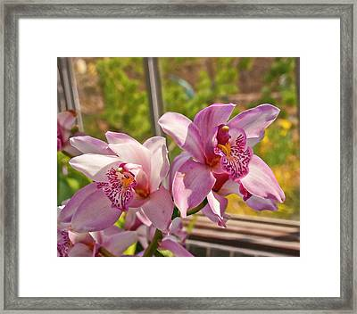 Spring Orchids Photograph Framed Print by Don  Wright