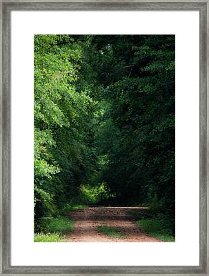 Spring Path Of Light Framed Print by Shelby Young