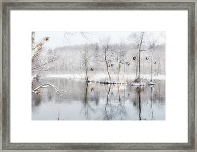 Spring Snow Framed Print by Bill Wakeley