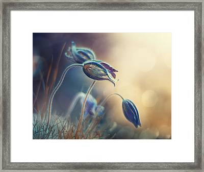 Spring Sunset Framed Print by Magda Bognar