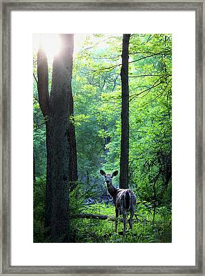 Spring Sunset On White-tailed Doe Framed Print by Codee Hart