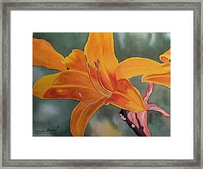 Spring Time Lily Framed Print by Brenda Brown
